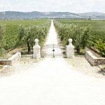 Puglia blogtour: Trani Day 2